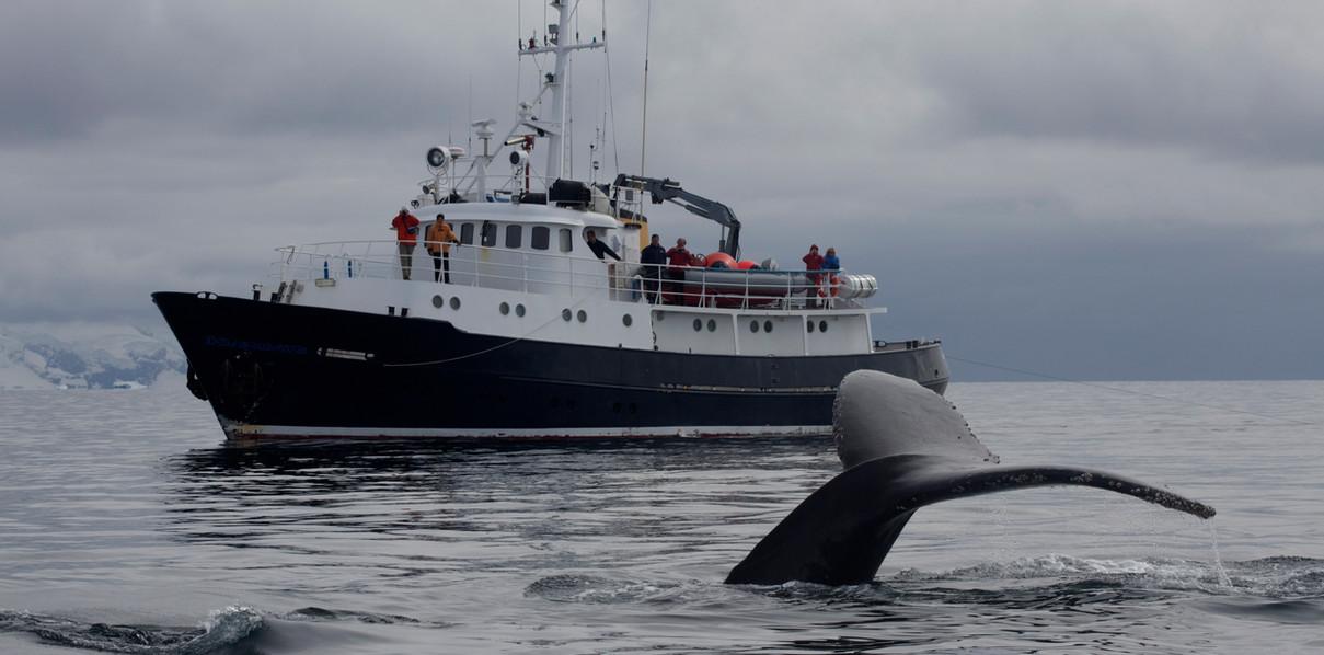 Hans Hansson & the whale