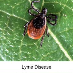 Lyme Disease-2.png