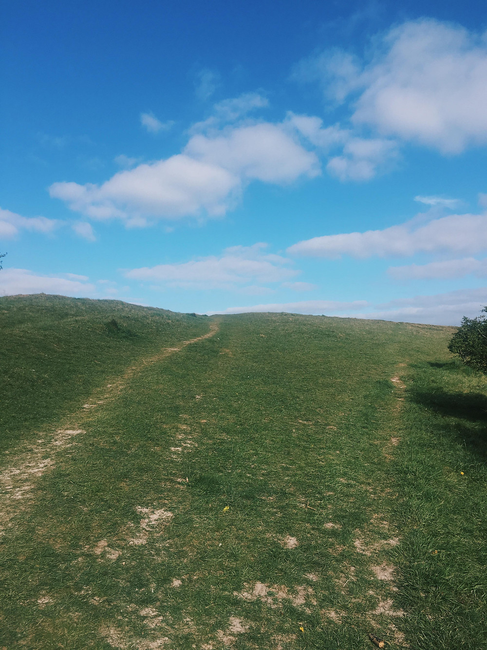 An image of a clear divide between a blue sky and green field with a path through.