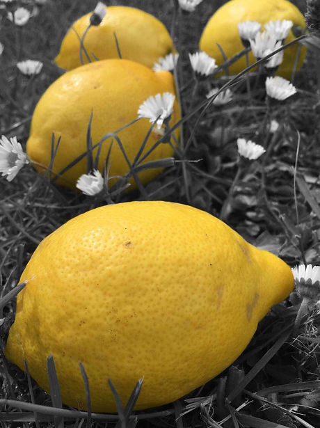Yellow lemons stand out against black and white grass.