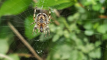 5 spider tips that will make you a better project manager