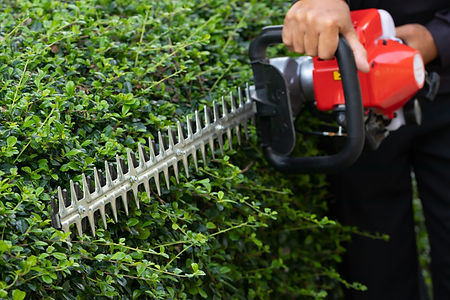 Home and garden concept. Hedge trimmer i