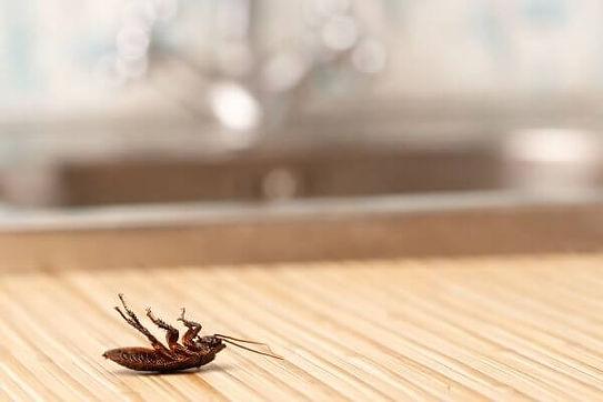 Roach & Bedbugs