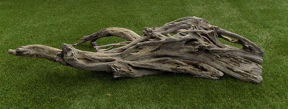 bois flotté bois de mangrove