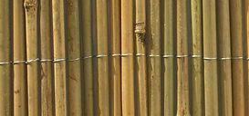 bambou plein