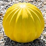 cactus jaune.jpg