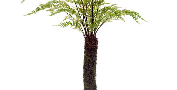 Forest Fern Tree