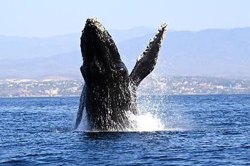 boat-tour-whale-watching.jpg
