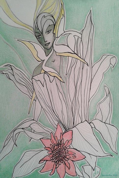 Elfa Shawandha-madera 20x30.jpg