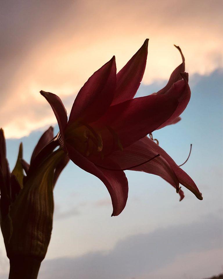 fleur.jpg