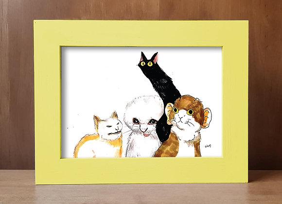 מימז של חתולים