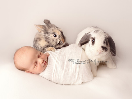 Baby A with his bunnies - newborn photographer Oxfordshire