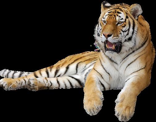 tiger2.png