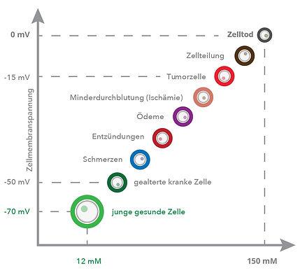 Zellmodell2.jpg