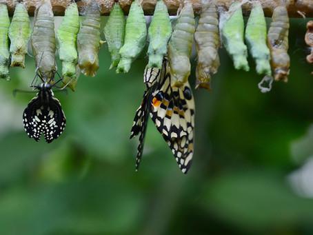 Der Wissenschaftler und der Schmetterling…