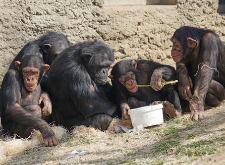 Das Affen-Theorem