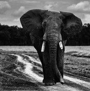 Wildlife Masai mara30.jpg