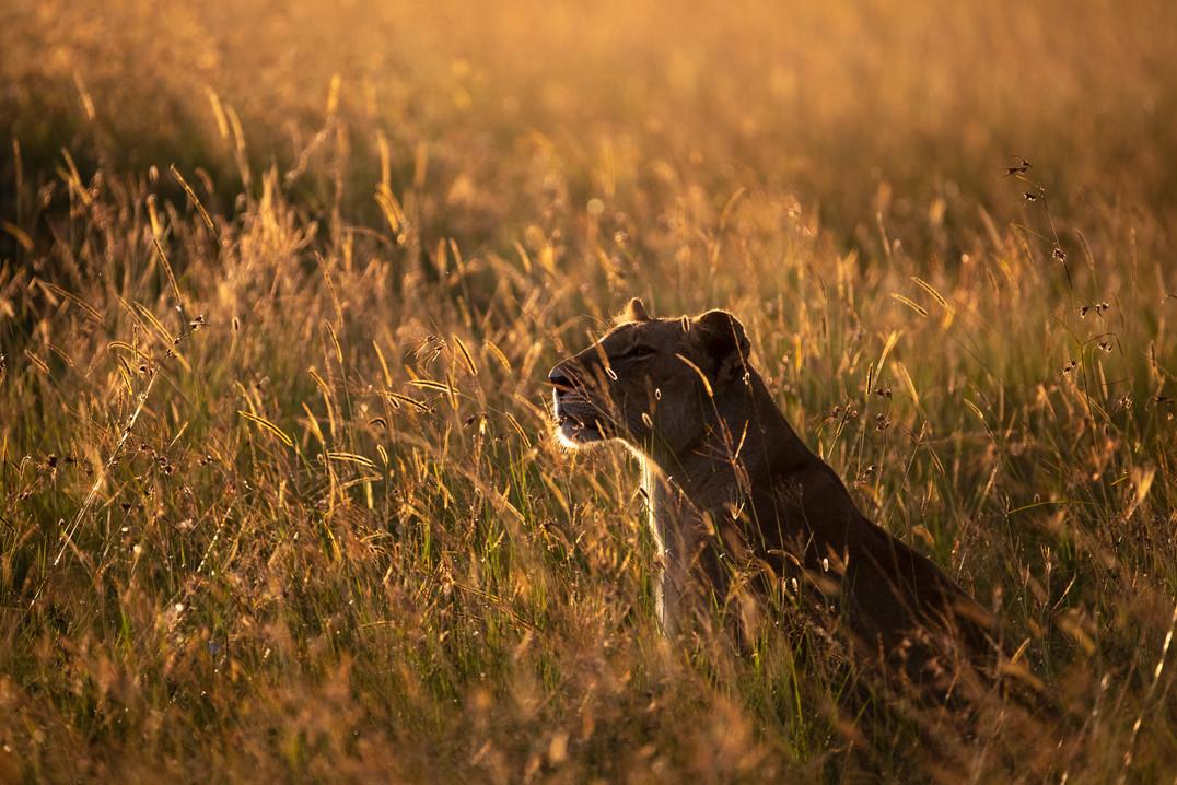 Wildlife Masai mara19.jpg