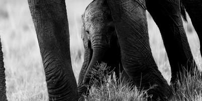 Wildlife Masai mara28.jpg