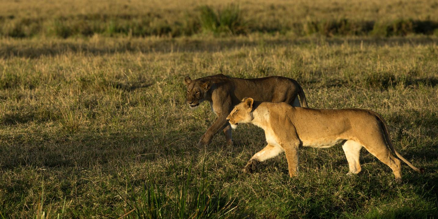 Diaporama Afrique V3 186.jpg