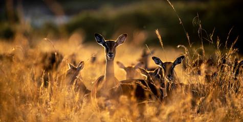 Wildlife Masai mara05.jpg
