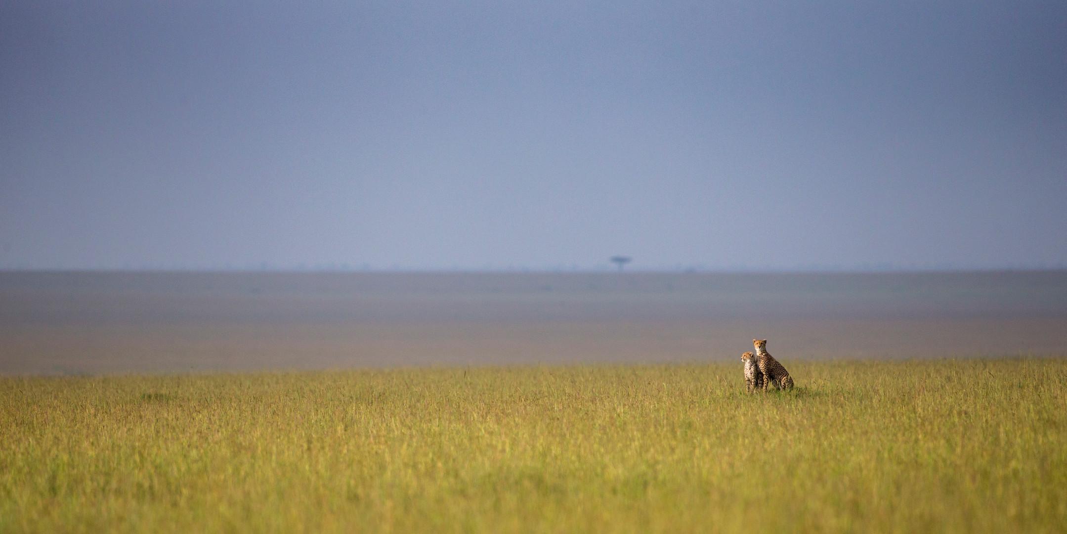 Wildlife Masai mara07.jpg
