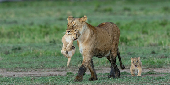 Wildlife Masai mara01.jpg