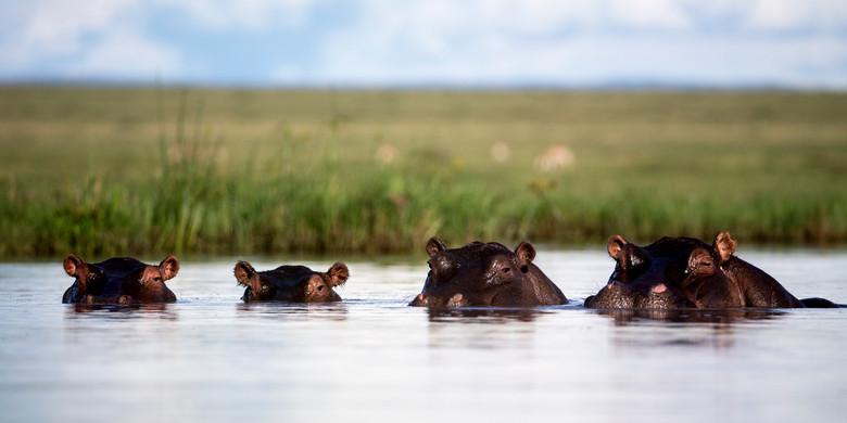 Wildlife Masai mara27.jpg