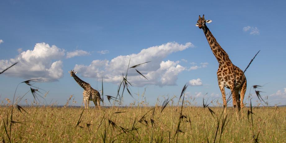 Wildlife Masai mara04.jpg
