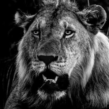 Wildlife Masai mara33.jpg