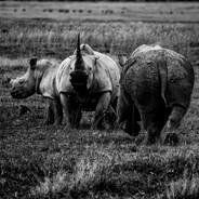 Wildlife Masai mara10.jpg