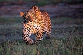 Wildlife Masai mara22.jpg