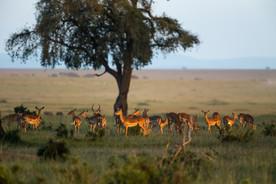 Diaporama Afrique V3 012.jpg