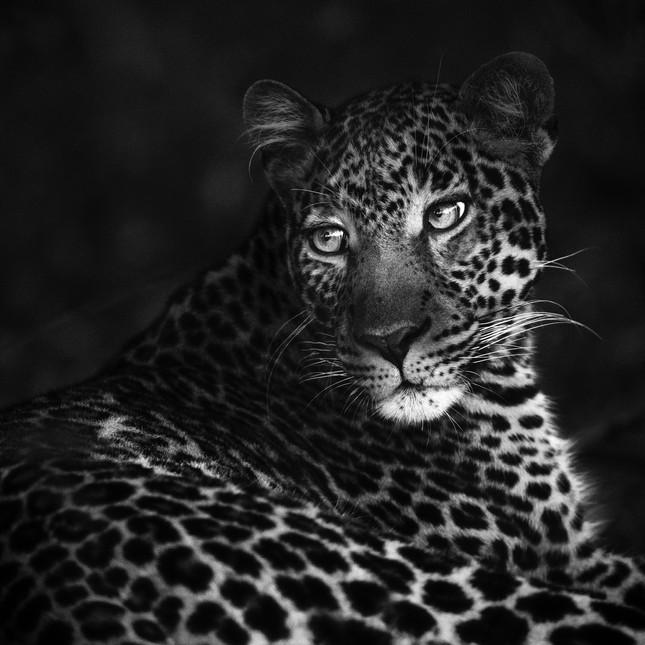 Wildlife Masai mara32.jpg