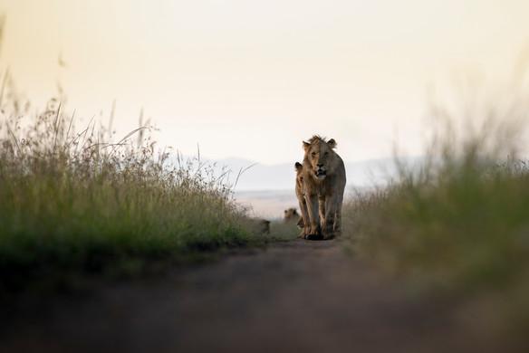Wildlife Masai mara20.jpg