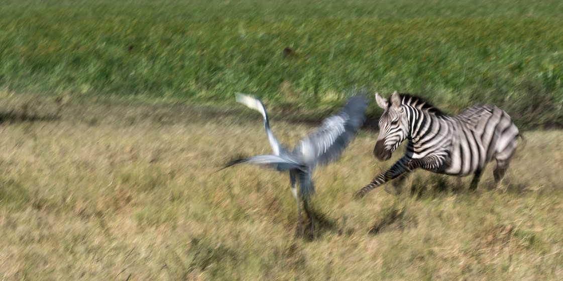 Wildlife Masai mara26.jpg