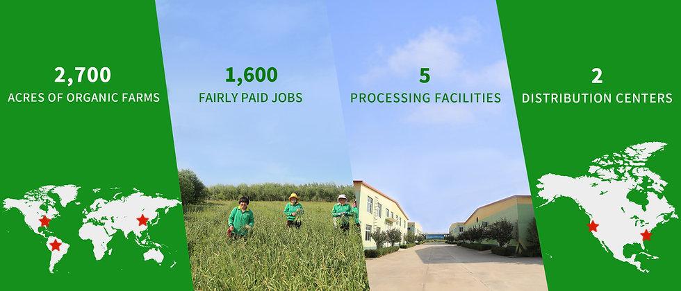 Organic Farmland