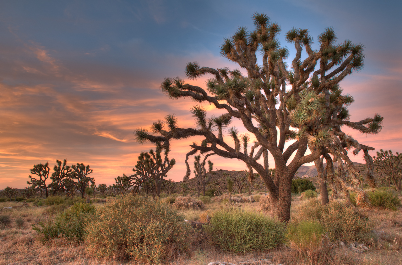Joshua Tree (California)