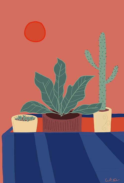 Windowsill_Plants.JPG