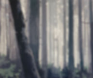forestpainting.jpg