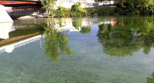 An algae bloom was visible at the mouth of McGregor Creek and the Thames River near the Fifth Street Bridge in Chatham, Ont. on Tuesday September 24, 2019. (Ellwood Shreve/Chatham Daily News)