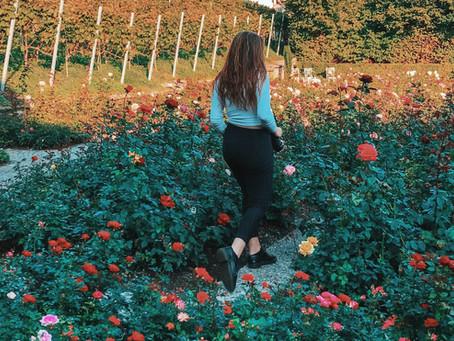 Trpělivost růže přináší