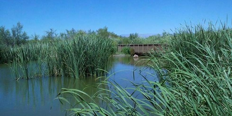 Wetlands Park Nature Preserve Hike