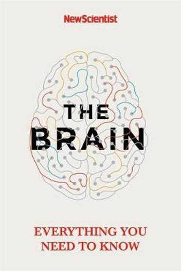 The Brain: Everything You Need to Know Scientist New