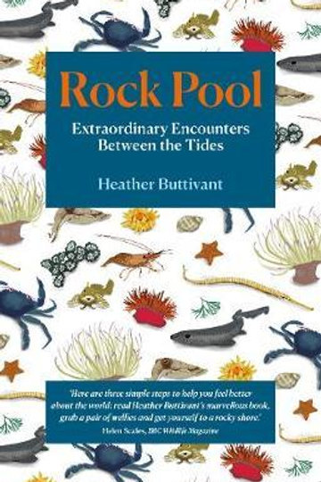 Rock Pool: Extraordinary Encounters Between the Tides Heather Buttivant