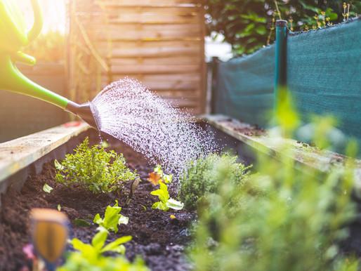 Gardening with Essential Oils