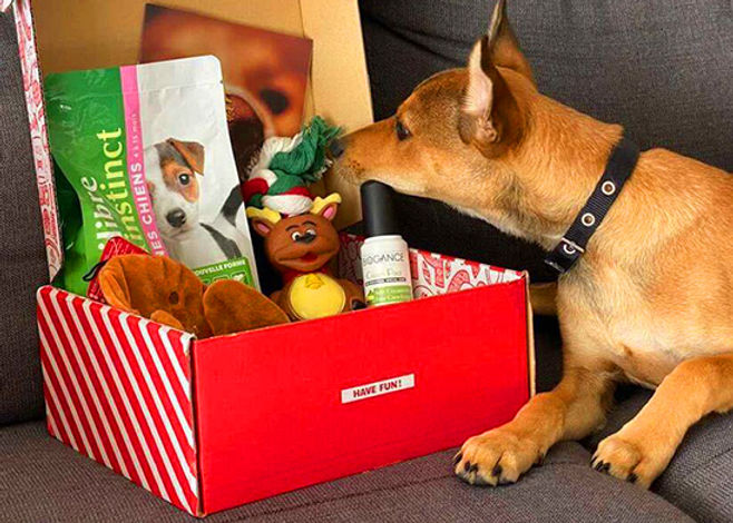 Woufbox Décembre.jpg