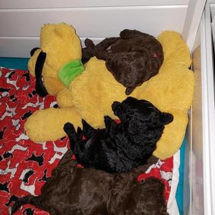 sleeping with Pluto
