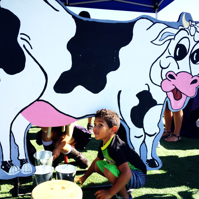 "SAn_Ysidro_Student_""milking""_the_Holland"
