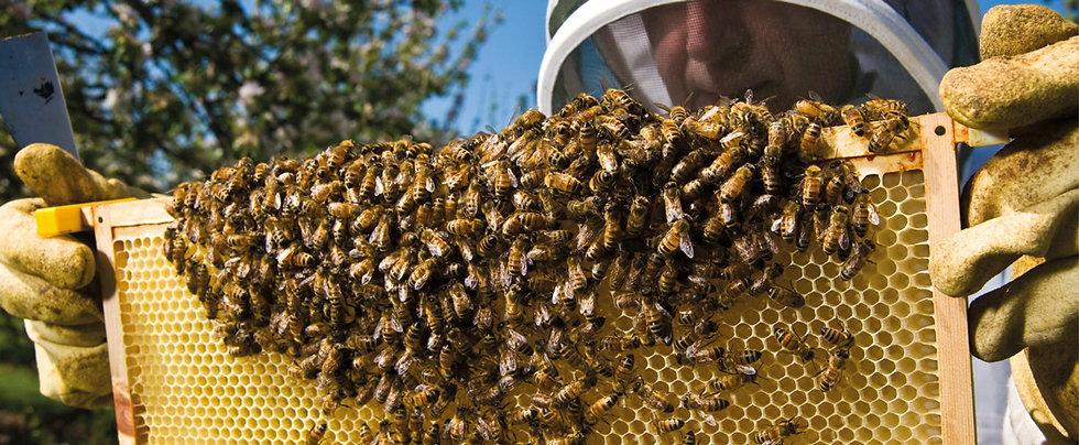 Bees_Cider.jpg
